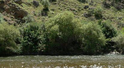 Գետերի ափապաշտպան անտառաշերտերի հիմնման համար կտրամադրվի 200 մլն դրամի դրամաշնորհ |armenpress.am|