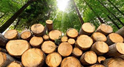 Անտառների պահպանության համար պատասխանատու պաշտոնատար անձանց նկատմամբ կկիրառվեն պատասխանատվության միջոցներ