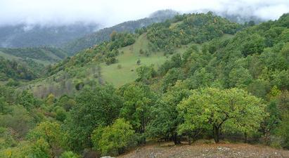 Լոռու մարզում անտառների պահպանության համար պատասխանատու 18 պաշտոնատար անձի մեղադրանքներ են առաջադրվել