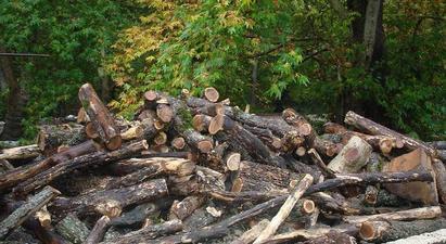 Մեկուկես ժամում Լոռիում հայտնաբերվել է առերևույթ ապօրինի փայտանյութով 19 բեռնատար
