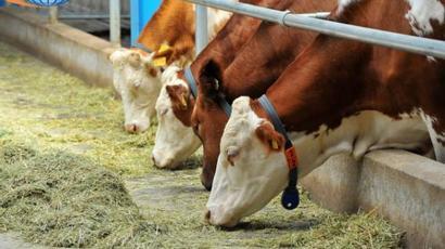 Խոշոր եղջերավոր կենդանիների համարակալման, հաշվառման համար նախատեսված գումարը վերադարձվել է պետբյուջե |armenpress.am|