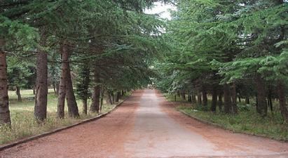 Բնության հատուկ պահպանվող տարածքներում և դենդրոպարկերում կսահմանվի հսկողության խստագույն ռեժիմ