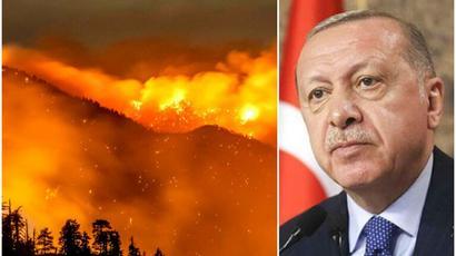 Էրդողանը հայտարարել է Թուրքիայում անտառներ հրկիզելու համար կասկածվողի ձերբակալման մասին |tert.am|