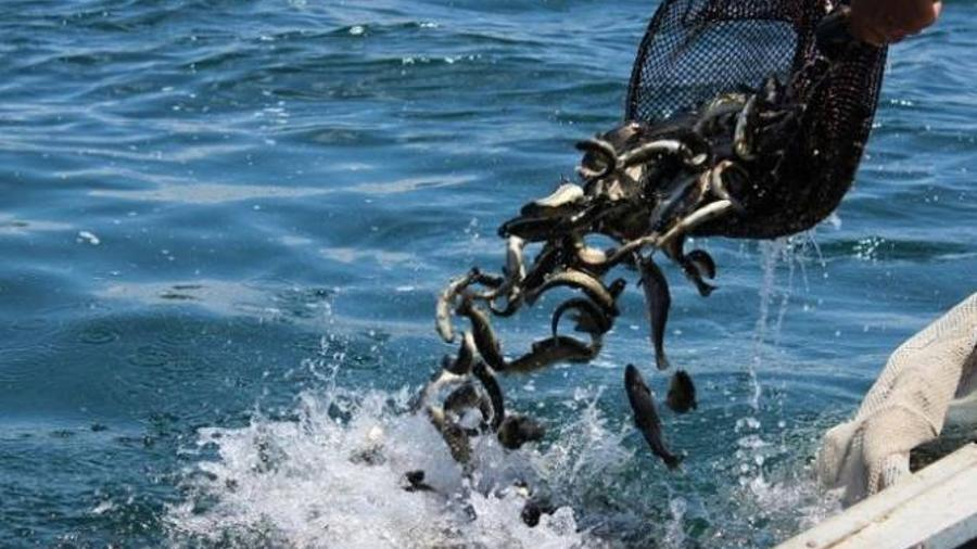 Սեպտեմբերի 1-ից ավարտվում է Սևանա լճում արդյունագործական փորձարարական ձկնորսության որսաշրջանը