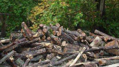 ՇՄ նախագիծ է ներկայացրել,  որով քաղաքացիները պարտավորվում են յուրաքանչյուր հատված ծառի փոխարեն նույն տեսակի և նույն քանակի ծառեր տնկել