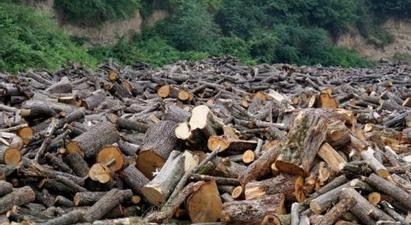 662 ապօրինի հատված ծառեր՝ մեկ ամսում. Միայն «Դսեղի անտառտնտեսություն»-ում 193 ծառ է հատվել