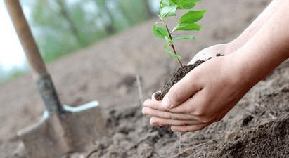 Մայրաքաղաքում կտնկվի շուրջ 5000 ծառ. մարտի 23-ին կանցկացվի շաբաթօրյակ- ծառատունկ